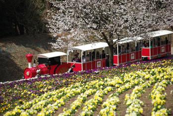 春の花を見ながら園内を走るフラワートレイン